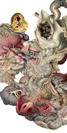 "Anatomical illustration by Nicolas Lamas: ""I am primarily interested in exposing the artifice that is implicit in any system of representation of living forms, revealing the falsehood inherent to the process of construction of knowledge in modern times and its utopias."" http://momaps1.org/studio-visit/artist/nicolas-lamas"