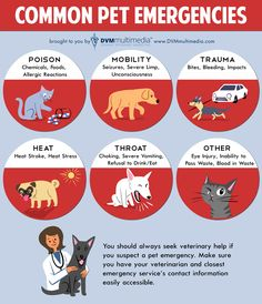 Common pet emergencies, make sure you know the signs.