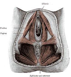 Know your pelvic floor