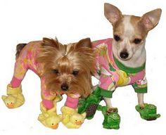 Dog slippers