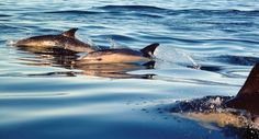 Fifty-six dolphins and whales have washed up on beaches in Ireland so far this year making 2017 the worst on record for such strandings. The number of deat