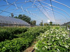 Cornell University in Ithaca, NY uses a Rimol Greenhouse Systems High Tunnel for growing fruits and vegetables