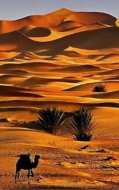 And while I am in Rajasthan, I will book a desert Safari. http://www.exploremyjourney.com