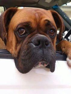 #Boxer look