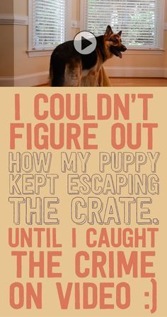 I couldn't figure out how my puppy kept escaping the crate until I caught the crime on video!!