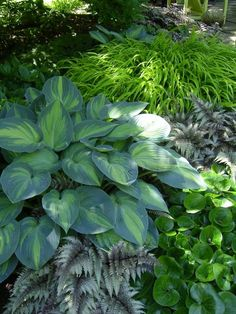 Shade plant combination: Hostas, Japanese Painted Ferns, Japanese Forest Grass: