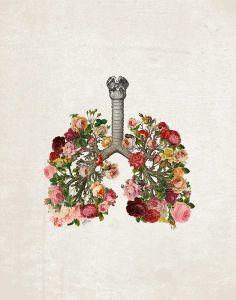 Non smoking lung
