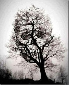 Daily Linked, what's interesting today!!: 29 Creepy Things all around