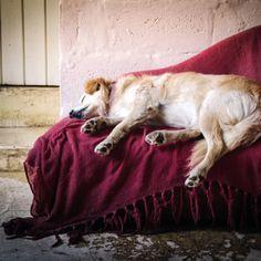 Sleep Well - sleep #sleep #sleeping #stressrelief #anxiety #relaxing