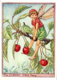 Cherry tree by Barker.