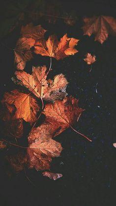 Autumn Wallpaper Hd, Iphone Wallpaper Herbst, Ed Wallpaper, Cute Fall Wallpaper, Beautiful Nature Wallpaper, Flower Wallpaper, Wallpaper Backgrounds, Fall Backgrounds Iphone, Fall Leaves Background