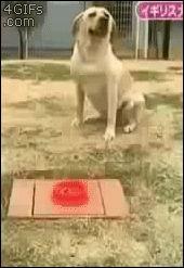 Dem Hund einen Streich spielen