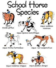 This is the best. I'm sure we rode all these :-) I think the horse i ride now is most of these... -_-