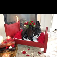 Valentine's Day ambiance -- SWEETEST PUPPY...Petunia <3