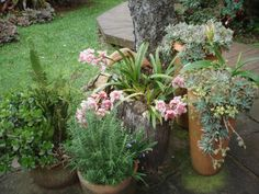 Vasos de flores, RS