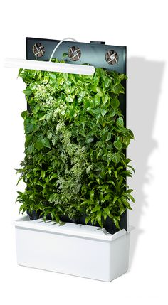 Piece of green furniture for contemporary indoor spaces that's been proven to purify indoor air and takes care of itself thanks to in-built smart technology. Indoor Plants Low Light, Outdoor Plants, Interior Garden, Interior Exterior, Succulent Wall, Rooftop Garden, Garden Structures, Plant Wall, Frames On Wall