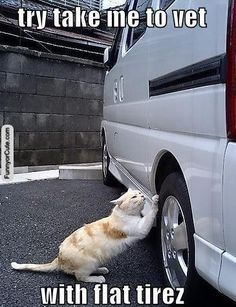 Just try and take me to the vet!:  They'd do it!