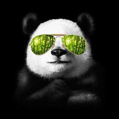 Cool Panda Framed Art Print by Jun Salazar - Vector Black - Cool Panda, Panda Love, Happy Panda, Image Panda, Bling Bling, Framed Art Prints, Canvas Prints, Panda Art, Kawaii