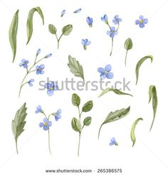 Watercolor floral elements set. Hand drawn illustration  isolated on white background - stock photo