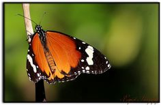 IMG_7565 | Flickr - Photo Sharing!