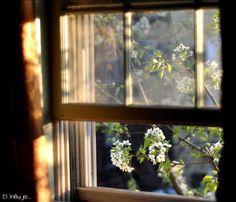 A window like Anne's