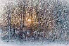 Winter Trees, Snow, Outdoor, Outdoors, Outdoor Games, The Great Outdoors, Eyes, Let It Snow