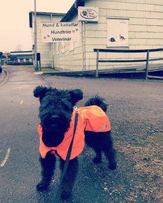 Elda fyndade regntäcke på rea hos Pias hund och fritid. Hurtta summit parka.