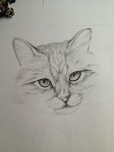 Pencil Sketch Drawing, Cat Sketch, Pencil Art Drawings, Art Drawings Sketches, Cat Drawing, Painting & Drawing, Animal Sketches, Animal Drawings, Cat Art