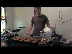 Cat fucks around on xylophone