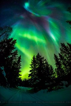 Forest and Northern Lights