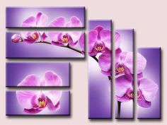 Triptico-primaveral-de-orquideas.jpg 500×375 pixels