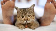 Cómo fortalecer tu relación gato-dueño