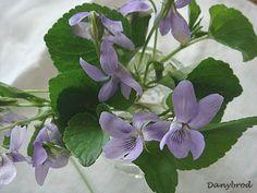 pale pretty violets