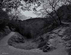 In every walk with nature one recieves far more than he seeks- #johnmuir . . . #tbt #sunset in #monochrome #hike #overlooking  #malibu  #bnw #bnw_captures #bnwsunsets #peaceful #nature  #photography #nikon #instadaily #instagram #instagood #nikonphotography #clouds  #natureblogger #photographer #losangelesphotographer #natgeotravel #fineartphotography  #sea #ocean #pacific #california #sunset_pics #nikonnofilter