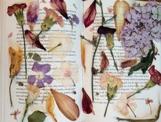 Solutions To Show That Pest Command Products And Services Are Useful For That Individuals Theartistandthephotographer: My Collection Of Pressed Flowers From This Summer Art Hoe Aesthetic, Flower Aesthetic, Arte Floral, Amazing Flowers, Dried Flowers, Spring Time, Art Inspo, Vintage World Maps, Artsy