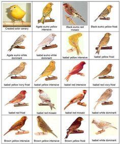 Little Birds, Love Birds, Beautiful Birds, Crazy Bird, Big Bird, Finch Bird House, Bird Breeds, Zebra Finch, Canary Birds