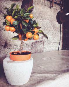 More & Tulipani:  Ode al mandarino  Dalla perla del fiore bianco sb...