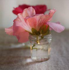 single flower in jar