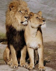 King and Queen Photography by unknown please DM for credit #Wildgeography