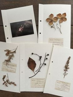 Using a sticky photo album? Field Notes, Nature Journal, Arte Floral, Journal Inspiration, Dried Flowers, Botanical Art, Creations, Stationery, Artsy