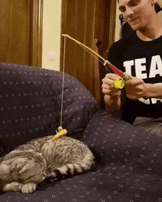 http://ift.tt/2rJH2Q2 to Catch a Kitty