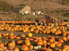 Love the old truck in middle of pumpkin patch