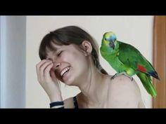 Animal Babies, Baby Animals, I Smile, Make Me Smile, Bird, Youtube, Birds, Youtubers, Cubs