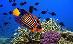angel fish 5 top spots for snorkelling in Mauritius Air Mauritius, Mauritius Island, Fiji Islands, Cook Islands, Bora Bora, Snorkeling, Bahamas Honeymoon, Paradise Island, Palawan