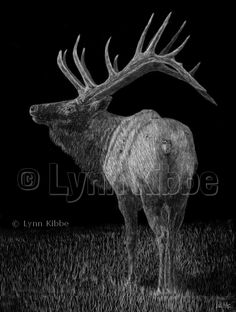 Bring It On (elk-companion piece to Let's Rumble), scratchboard, original sold, prints available