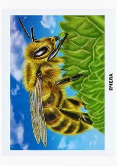 Child Development: vizuális didaktikus kézi-Rovarok Child Development Psychology, Paper Birds, Bee Art, Amazing, Butterfly, Clip Art, Pictures, Preschool, Kids