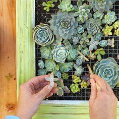How to make a succulent vertical garden