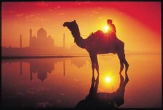 Bring the heat with our Color Palette du Jour - Taj Mahal Sunset. Agra, Taj Mahal, Bring The Heat, Beautiful World, Camel, India, In This Moment, History, Animals