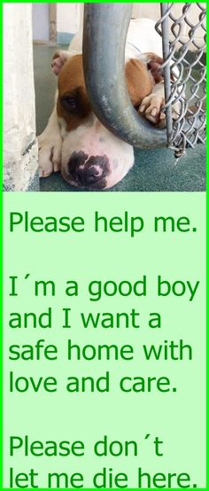 SCOOBY (A1684864)I am a male brown and white American Bulldog mix. The shelter staff think I am about 4 years old. I was found as a stray and I may be available for adoption on 03/15/2015. Miami Dade County Animal Services. https://www.facebook.com/urgentdogsofmiami/photos/pb.191859757515102.-2207520000.1428162878./956229494411454/?type=3&theater