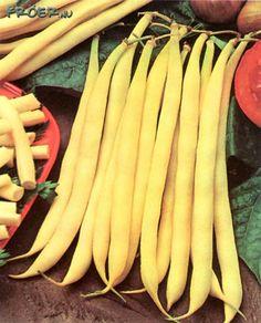 Vaxböna. Fabaceae.